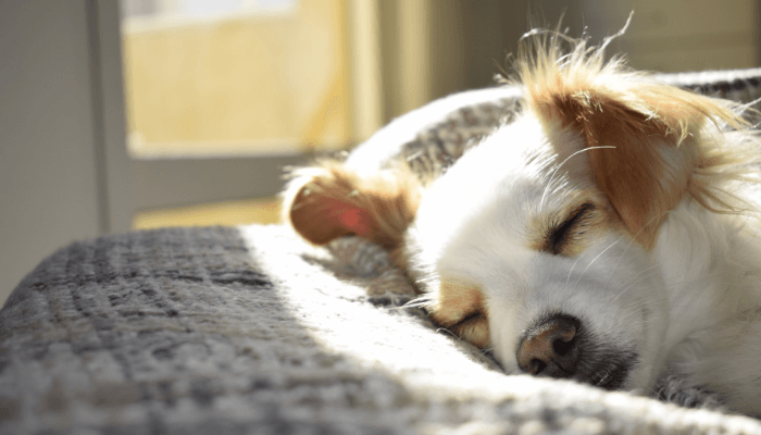 What Does It Mean If You Dream about Dog