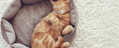What Does It Mean If You Dream about Cats?