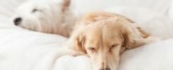 How much does a dog sleep?